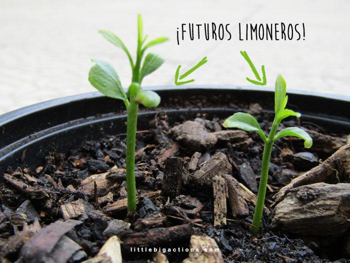 futuros limoneros