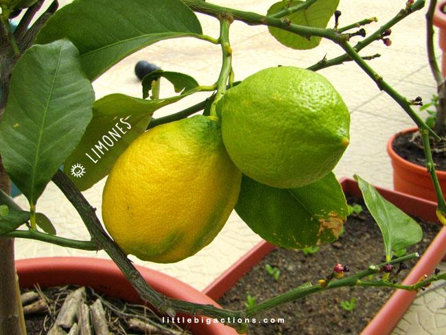 mis limones