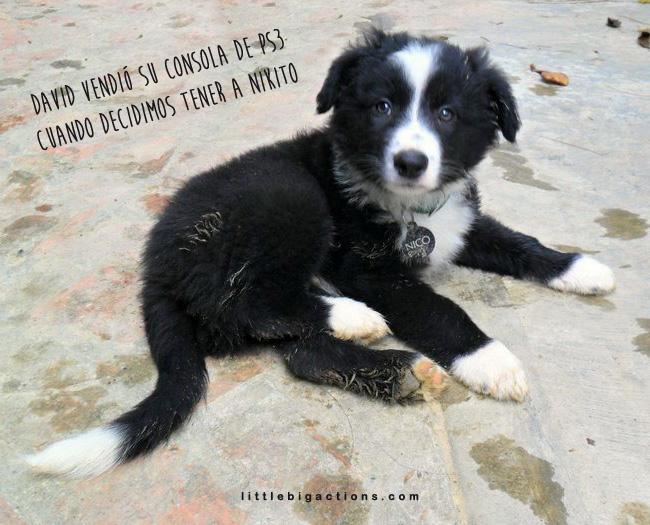 Nikito de cachorro