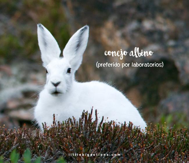 el conejo albino