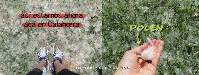 primavera en Calahorra