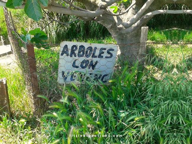Árboles con veneno
